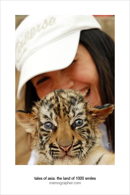 A Baby Tiger. Tiger Temple, Thailand