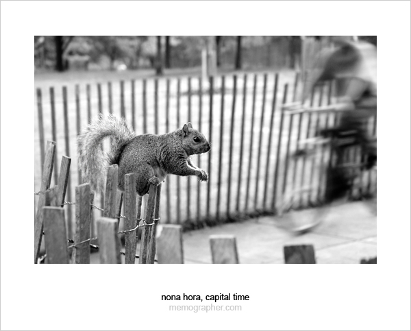 The Capital Squirrel. Washington, D.C.