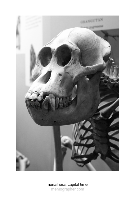 A Portrait of the Past. Smithsonian National Museum of Natural History
