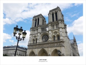 The Pigeons of Notre Dame de Paris