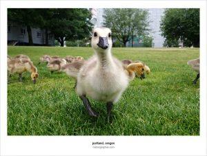 Duck Doug. Portland, Oregon